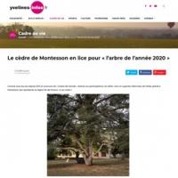 Le cèdre de Montesson en lice pour «l'arbre de l'année 2020»