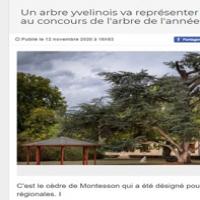 Un arbre yvelinois va représenter l'Ile-de-France au concours de l'arbre de l'année