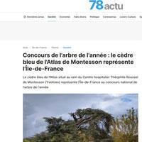 Concours de l'arbre de l'année : le cèdre bleu de l'Atlas de Montesson représente l'Ile-de-France