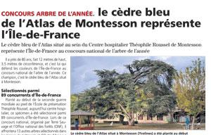 Le cèdre Bleu de l'Atlas de Montesson représente l'Ile de France